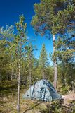 Tent pitched in forest. Next to pine tree during sunny day royalty free stock photography