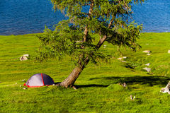 Tent on the shore of a mountain lake on a sunny day Stock Images