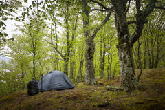 Tent in the spring forest Royalty Free Stock Images