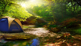 Tent in a sunny forest stock photo