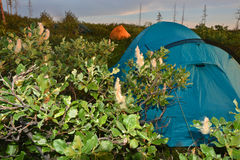Tent in the tundra. Stock Images