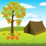 Tent under aple tree Royalty Free Stock Image