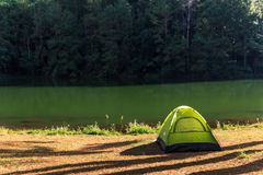 Tent under the pine forest Stock Photography