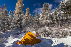 Tent under the snow in the winter forest Stock Photos
