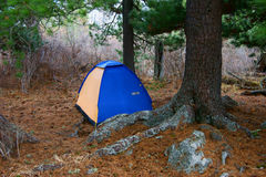 Tent under tree Royalty Free Stock Image