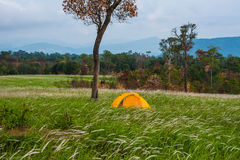 Tent under tree Royalty Free Stock Images