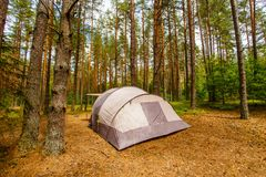 Tent voor familie die in pijnboombos kamperen stock foto's