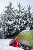Tent in the winter forest. Stock Photography