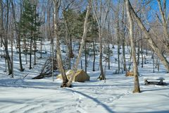 Tent in winter forest 11 Stock Photos