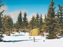 Tent in winter landscape. Trekking tent, poles, red  snowshoes on snow between trees. In the mountains. Nice sunny winter day Stock Image
