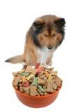 Tentación del perro Imágenes de archivo libres de regalías