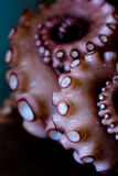 Tentacle of octopus Royalty Free Stock Images