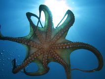 Tentacles Royalty Free Stock Images