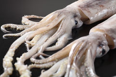 Tentacles Royalty Free Stock Photo