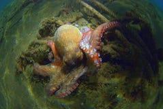 tentacles Immagini Stock