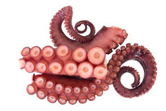 Tentacles of octopus Royalty Free Stock Photography