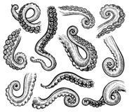 Tentacles of octopus, vector hand drawn collection of engraving illustrations.