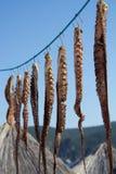 Tentacoli del polipo che appendono su un gancio Frutti di mare sani Fotografie Stock