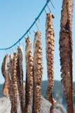 Tentacoli del polipo Frutti di mare sani e saporiti Stagione di estate Fotografia Stock Libera da Diritti