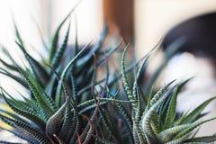 Tentacoli della pianta Fotografie Stock
