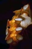 Tentacolo del polipo Fotografia Stock