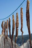 Tentacules de poulpe accrochant sur un crochet Fruits de mer sains photos stock