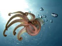 tentakel Fotografering för Bildbyråer