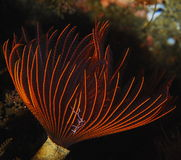 tentakel Royaltyfri Foto