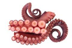 Tentakels van octopus Royalty-vrije Stock Fotografie