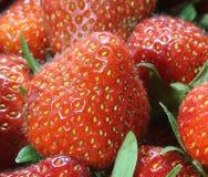 Tentations : fond des fraises mûres rouges Photographie stock