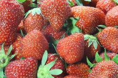 Tentations : fond des fraises mûres rouges Photographie stock libre de droits