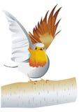Tentativa do pisco de peito vermelho a voar ilustração stock