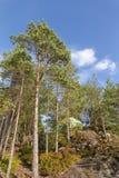 Tente dans les bois Photos libres de droits