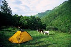 Tente jaune photos stock