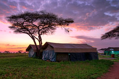Tented camp in savannah Royalty Free Stock Images
