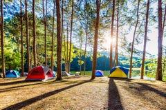 Tentes de camping sous des pins avec la lumière du soleil au lac pang Ung, Mae Hong Son en THAÏLANDE Photos libres de droits