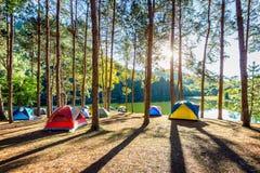 Tentes de camping sous des pins avec la lumière du soleil au lac pang Ung, Mae Hong Son en THAÏLANDE Photographie stock libre de droits