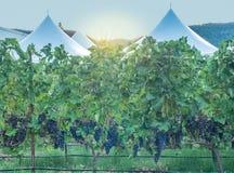 Tentes de jardin Images stock