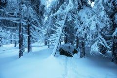 Tentes vertes dans le camp de touristes de forêt d'hiver dans la tente neigeuse de forêt dans la neige dans l'horaire d'hiver Bea image stock