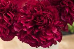 Tentoonstelling van karmozijnrode boeketten van pioenen Royalty-vrije Stock Foto's
