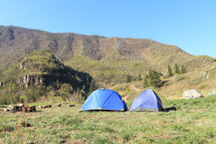 tents Royaltyfri Fotografi
