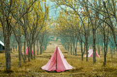 tents Arkivbild