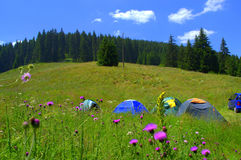 Tents in beautiful mountain dell Royalty Free Stock Images