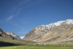 Tents camp among snowed summits Stock Images