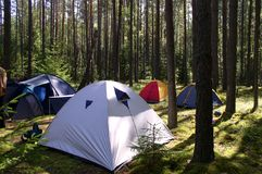 Tents in the Forest Royalty Free Stock Photo