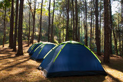 Tents in pine sitecamp Stock Photography