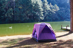 Tents of traveler in camping site near lake Stock Photography