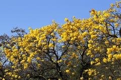 Tenue de protection individuelle de jaune de détail de fleur Photo stock