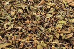 有机干燥绿色或圣洁蓬蒿(罗勒属tenuiflorum)叶子 免版税库存图片