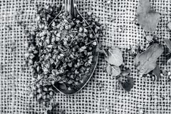Tenuiflorum Ocimum, ιεροί σπόροι βασιλικού ` s σε ένα κουτάλι σε ένα gunny υπόβαθρο στοκ φωτογραφία με δικαίωμα ελεύθερης χρήσης